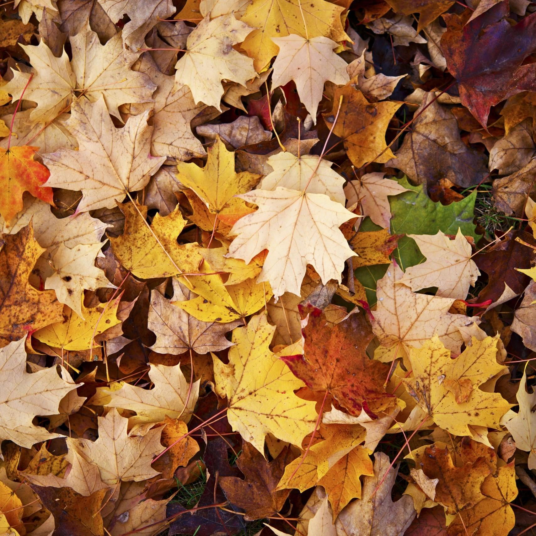 Novità autunno Mantovanibenne
